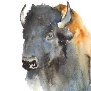 Buffalo Study by Judy Milne